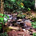 Jungle Pains